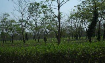 India Visit March 2018 | Tea Parametric Insurance